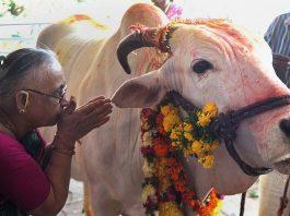 Benefits of Cow Urine and Panchgavya