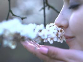 Power of smell and memory
