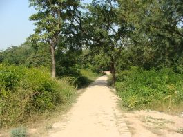An Indian village approach road