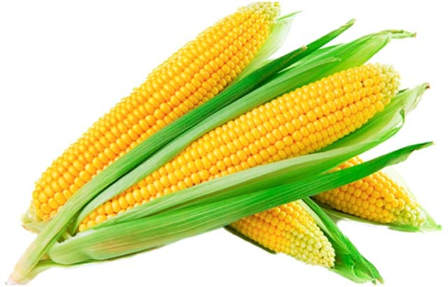 Corn - Gluten free food to fight celiac disease