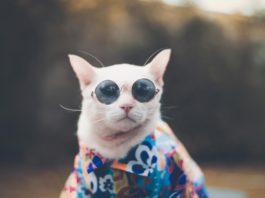 Cool Cat - Round Sun Glasses