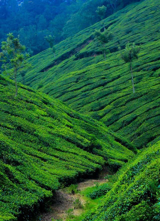 Mountain Tourism - Green Hills